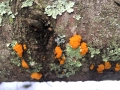 bowdoin pines