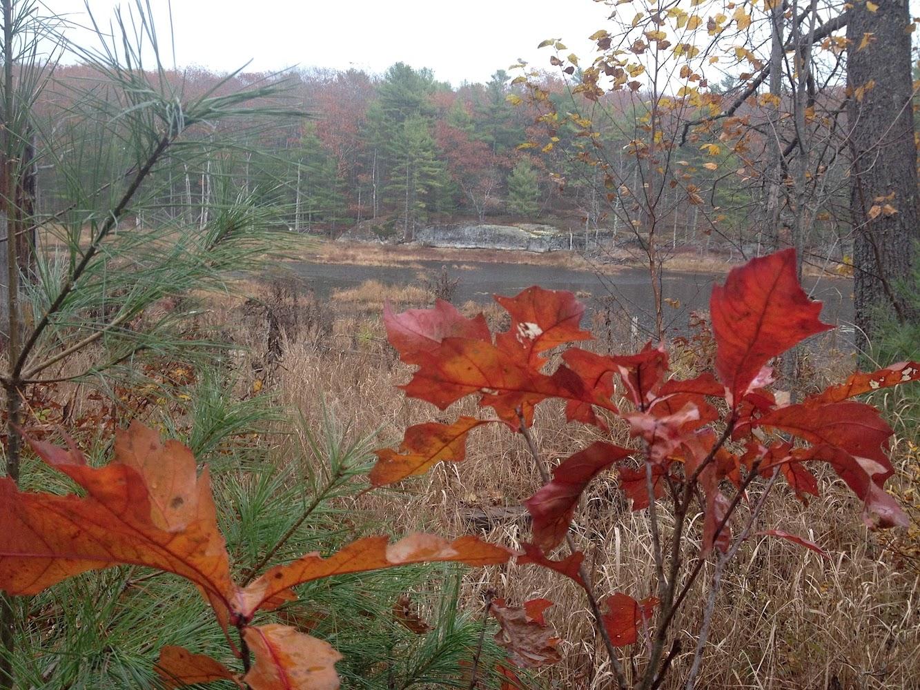 centerpond-red-leaf