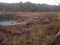 center-pond-beaver-pond-panaramo