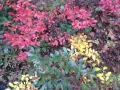 centerpondcolorfulleaves