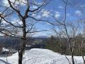 hawk_winter2