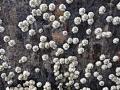 barnacles800