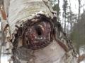 eyetree