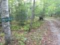 marys woods 800d