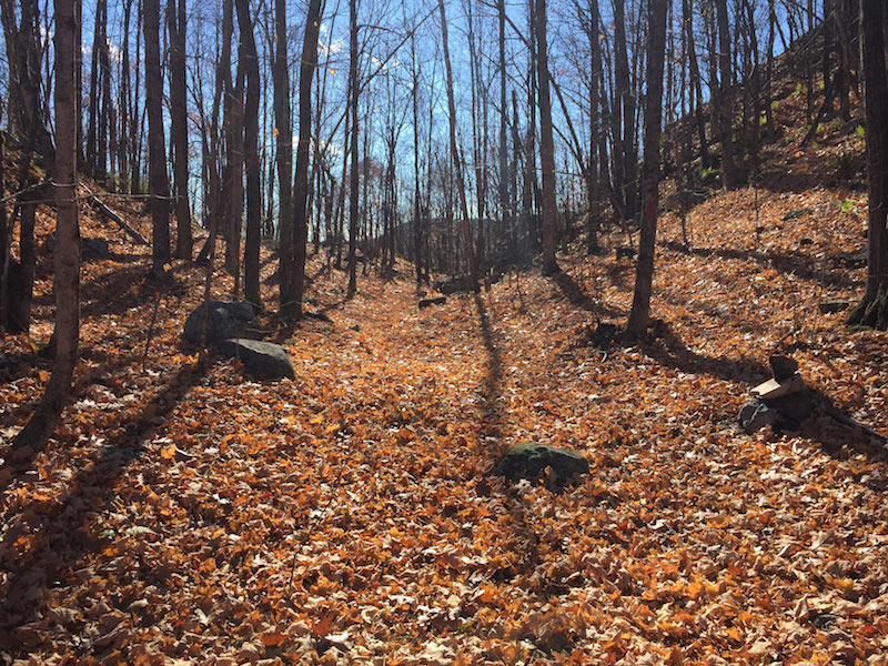 Maine by foot mount cutler hiram cutler800d publicscrutiny Images