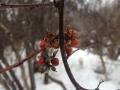 sweetsirberry800a
